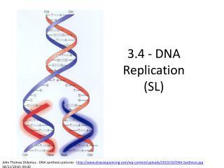 3.4 - DNA Replication (SL)