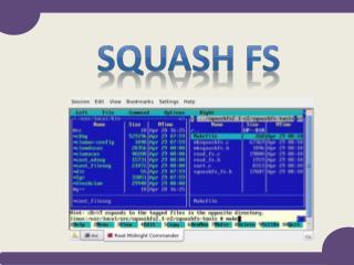 Squash FS