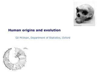 Human origins and evolution