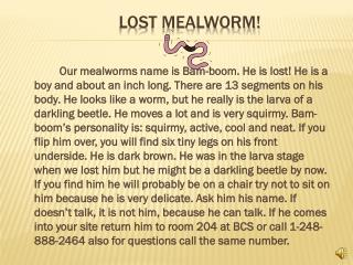Lost Mealworm!