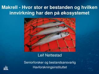 Makrell - Hvor stor er bestanden og hvilken innvirkning har den på økosystemet