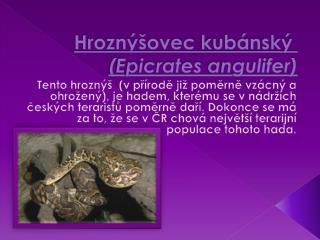 Hroznýšovec  kubánský ( Epicrates angulifer )