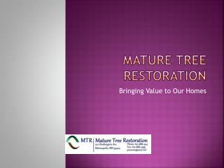 Mature Tree Restoration