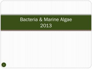 Bacteria & Marine Algae 2013