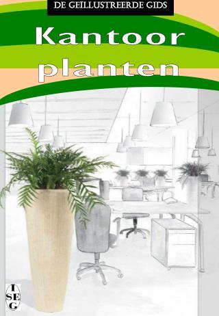 Kantoor planten