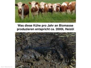 Was diese Kühe pro Jahr an Biomasse produzieren entspricht ca. 2000L Heizöl