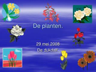 De planten.