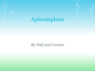 Phylum Apicomplexa