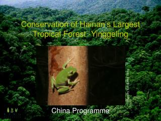 Conservation of Hainan's Largest Tropical Forest -Yinggeling