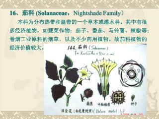 16 、茄科  (Solanaceae , Nightshade Family )