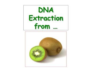 DNA Extraction from �