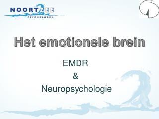 Het emotionele brein