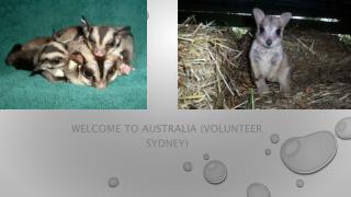 Volunteer Sydney