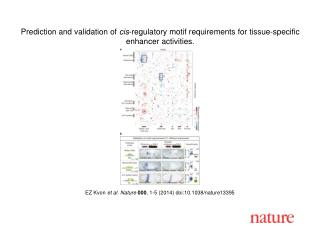 EZ Kvon et al. Nature  000 , 1-5 (2014)  doi:10.1038/nature13395