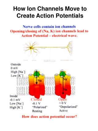 How Ion Channels Move to Create Action Potentials