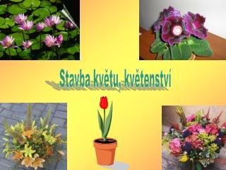 Stavba květu, květenství