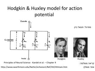Hodgkin & Huxley model for action potential