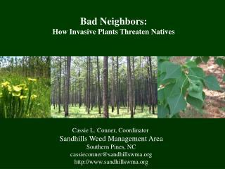 Cassie L. Conner, Coordinator  Sandhills Weed Management Area Southern Pines, NC cassieconnersandhillswma sandhillswma