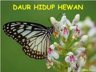 DAUR HIDUP HEWAN
