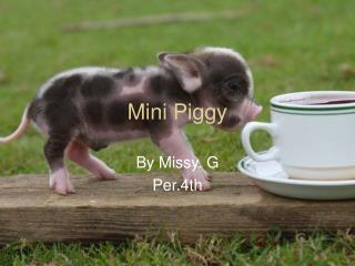 Mini Piggy