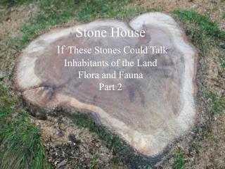 Stone House If These Stones Could Talk Inhabitants of the Land Flora and Fauna Part 2
