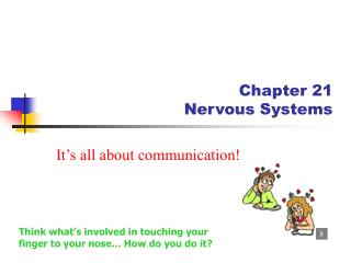 Chapter 21  Nervous Systems