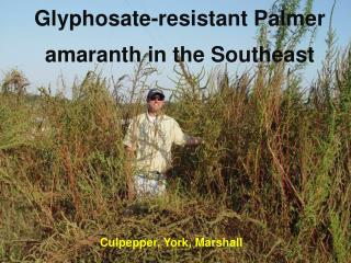 Glyphosate -resistant Palmer amaranth in the Southeast