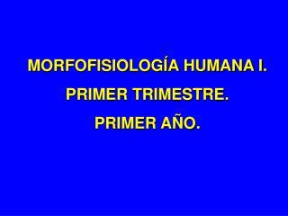 MORFOFISIOLOGÍA HUMANA I. PRIMER TRIMESTRE. PRIMER AÑO.