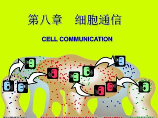 第八章  细胞通信