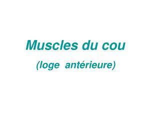 Muscles du cou     (loge  antérieure)