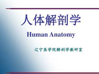人体解剖学 Human Anatomy