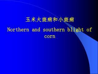 玉米大斑病和小斑病 Northern and southern blight of corn