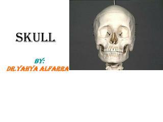 Skull          BY:                DR.Yahya Alfarra