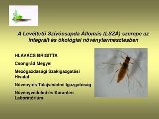 A Levéltetű Szívócsapda Állomás (LSZÁ) szerepe az integrált és ökológiai növénytermesztésben