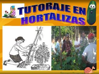 TUTORAJE EN  HORTALIZAS