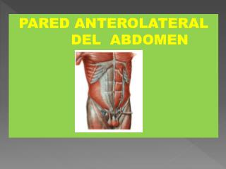 PARED ANTEROLATERAL        DEL  ABDOMEN