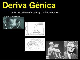 Deriva G énica Deriva, Ne, Efecto Fundador y Cuellos de Botella, Deriva+Selección