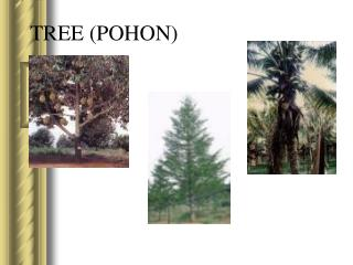 TREE (POHON)