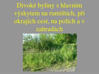 Divoké byliny s hlavním výskytem na rumištích, při okrajích cest, na polích a v zahradách