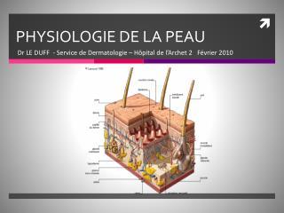 PHYSIOLOGIE DE LA PEAU