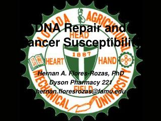 DNA Repair and Cancer Susceptibility