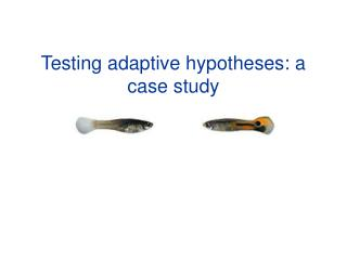 Testing adaptive hypotheses: a case study