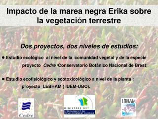 Impacto de la marea negra Erika sobre  la vegetaci Ó n terrestre