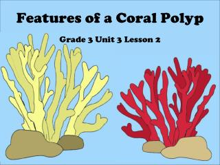 Features of a Coral Polyp