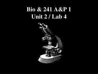 Bio  241 AP 1  Unit 2