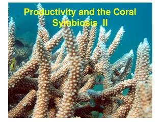 Productivity and the Coral Symbiosis  II