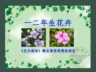 一二年生花卉