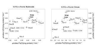 U(VI)  vs  Ferric Hydroxide