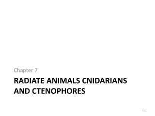 Radiate animals Cnidarians and Ctenophores