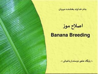 Banana Breeding